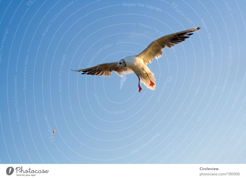 Sky Nature Blue Beautiful Animal Environment Air Bird Weather Flying Wild animal Elegant Success Speed Nutrition Wing