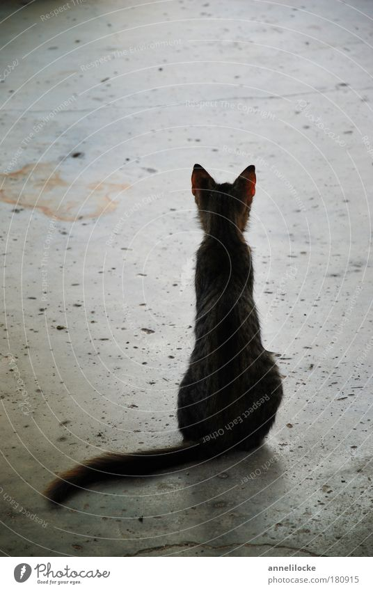 Waiting ... Street Animal Pet Cat Looking Sit Dream Sadness Thin Wild Gray Hope Grief Loneliness Concrete Floor covering Striped Ear Tails Appetite Street cat