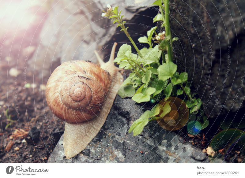 Nature Plant Green Flower Animal Autumn Garden Gray Stone Wild animal Snail Crawl Slowly
