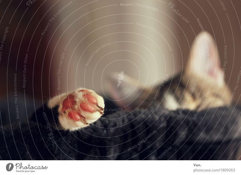 Cat Animal Black Pelt Pet Paw