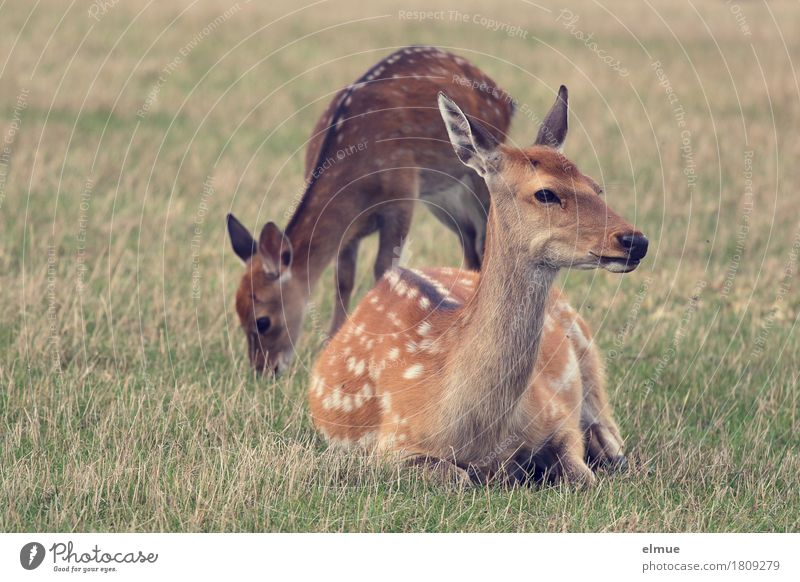 Nature Animal Baby animal Life Meadow Happy Brown Together Contentment Lie Elegant Wild animal Stand Romance Curiosity Break