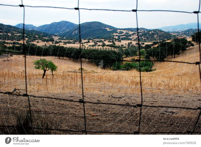 prisoner Colour photo Exterior shot Structures and shapes Deserted Twilight Light Environment Nature Landscape Plant Sky Summer Beautiful weather Tree Grass