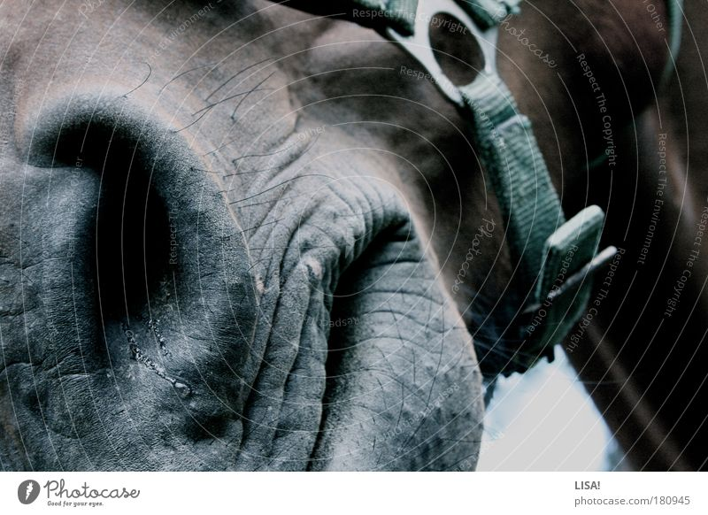 My next one's running. Colour photo Subdued colour Exterior shot Close-up Detail Deserted Day Light Shadow Contrast Animal Pet Farm animal Horse Animal face