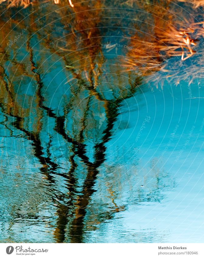 tree Tree Water River Reflection Branch Blur Unclear River bank Escarpment Surrealism False Nature Impression Real estate Rural Body of water Splashing Wind