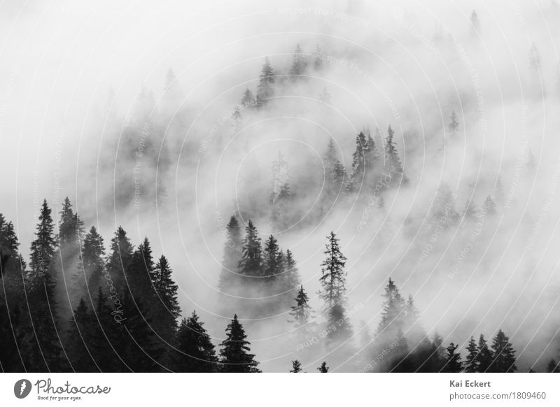 Mountains, forest and fog IV Landscape Plant Clouds Weather Fog Tree Forest Alps Peaceful Calm Longing Loneliness Adventure Contentment Freedom Transience