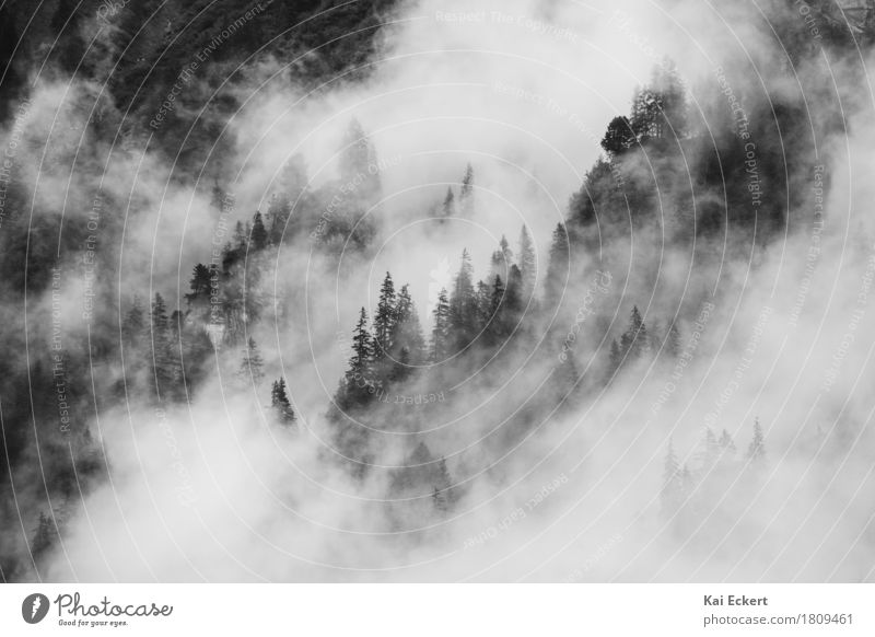 Nature Tree Landscape Clouds Dark Forest Mountain Cold Weather Contentment Fog Beginning Adventure Mysterious Alps Concentrate