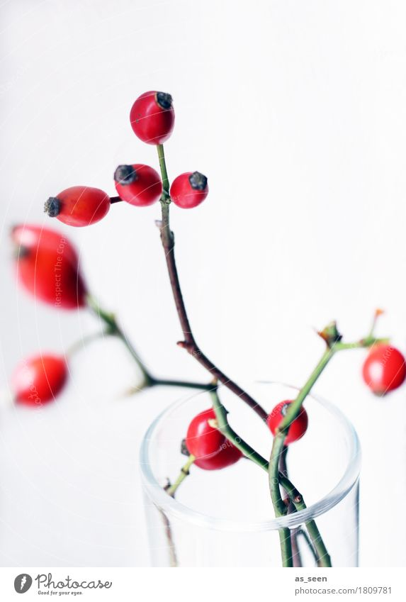 rosehip twigs Lifestyle Style Design Harmonious Flat (apartment) Decoration Environment Nature Autumn Plant Rose hip Berries Fruit Vase Vessel Glass Movement