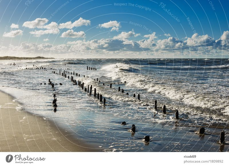 The Baltic Sea coast on a stormy day Relaxation Vacation & Travel Tourism Beach Ocean Nature Landscape Water Clouds Gale Coast Wood Romance Idyll groynes