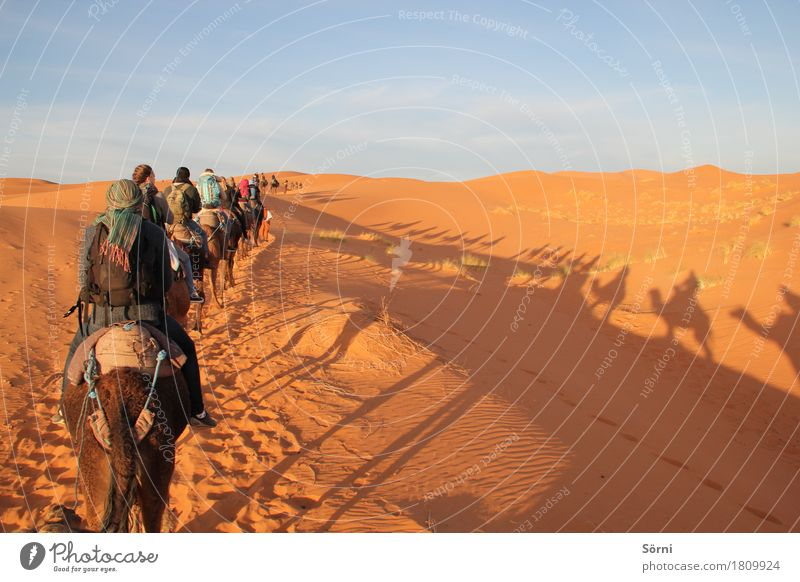 Vacation & Travel Animal Far-off places Freedom Sand Tourism Trip Adventure Desert Dune Long Exotic Expedition To swing Shadow play Morocco