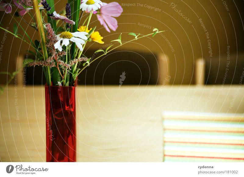 Nature Beautiful Flower Plant Calm Life Happy Dream Contentment Room Flat (apartment) Table Esthetic Chair Decoration Education