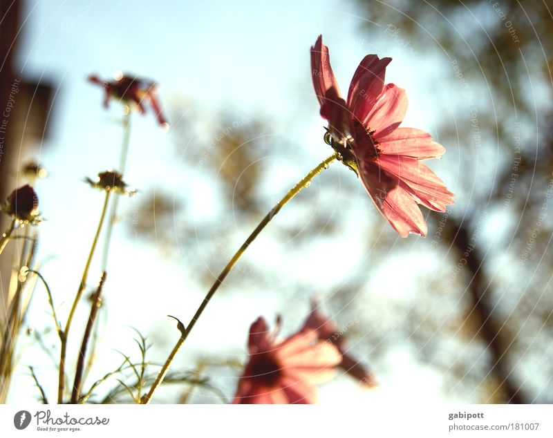 Pastel no.2 Subdued colour Exterior shot Close-up Deserted Day Sunlight Back-light Shallow depth of field Nature Landscape Plant Sky Summer Flower Leaf Blossom