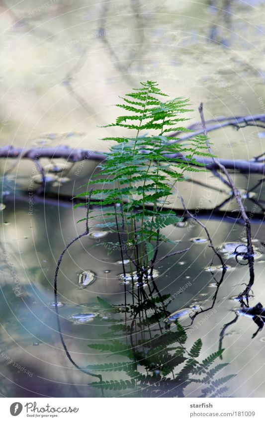 Nature Water Green Blue Plant Leaf Autumn Spring Gray Brown Drops of water Gloomy Near Simple Natural Silver