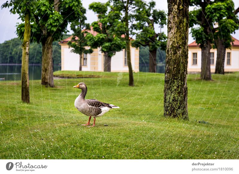 Is that St. Martin's goose yet? Vacation & Travel Tourism Trip Sightseeing City trip Environment Nature Landscape Spring Beautiful weather Bad weather Tree Park