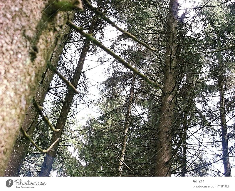 forest Forest Coniferous trees Nature Graffiti