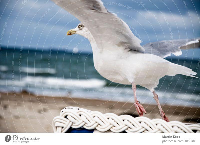 Summer Ocean Beach Animal Autumn Feet Coast Bird Horizon Flying Esthetic Aviation Near Wing North Sea Baltic Sea