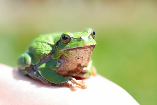 Green frog Nature Colour Summer White Loneliness Animal Face Eyes Environment Yellow Natural Grass Small Think Jump