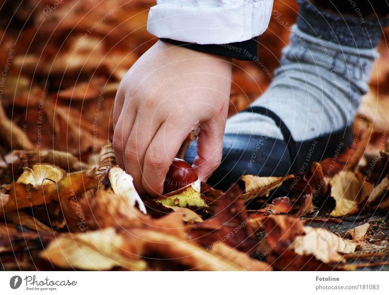 My chestnut! Colour photo Multicoloured Exterior shot Close-up Day Light Sunlight Human being Child Girl Hand Fingers Feet 1 Environment Nature Plant Earth