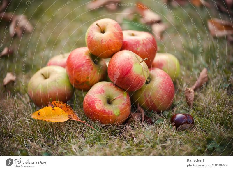 Apples, autumn, chestnuts I Fruit Autumn Leaf Contentment Safety (feeling of) Warm-heartedness Colour photocase Chestnut Grass Red Yellow Green Brown