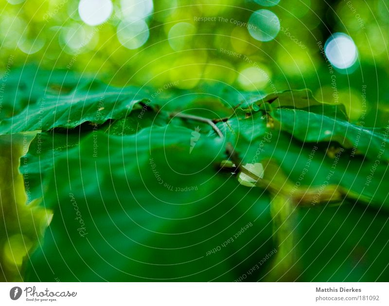 Nature Green Plant Summer Leaf Calm Glittering Abstract Twig Foliage plant Photosynthesis Leaf green Tone-on-tone