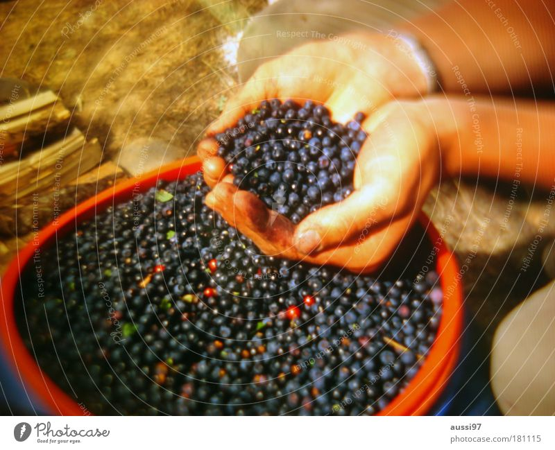 bears Berries fruits hunger poor Markets Agriculture vitamins