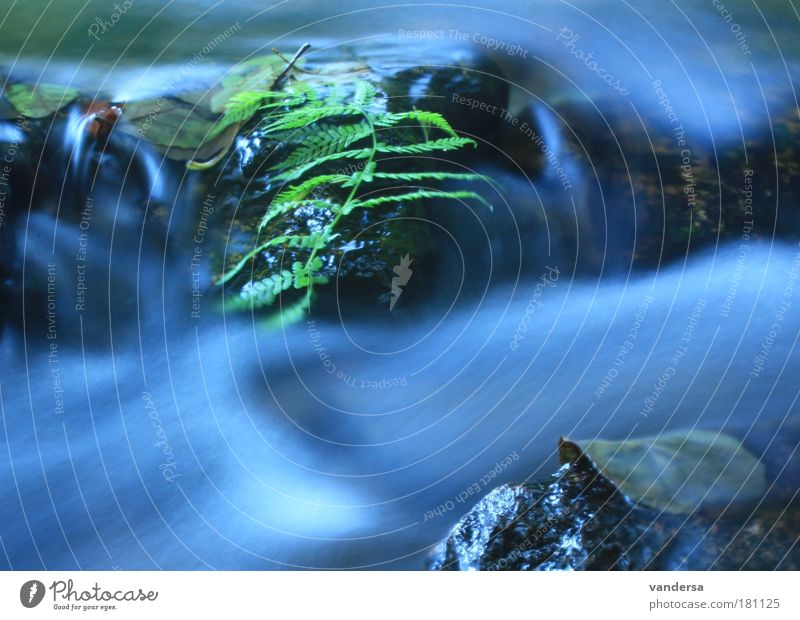 Nature Water Leaf Environment Landscape Autumn Waves River River bank Dynamics Brook Fern Body of water
