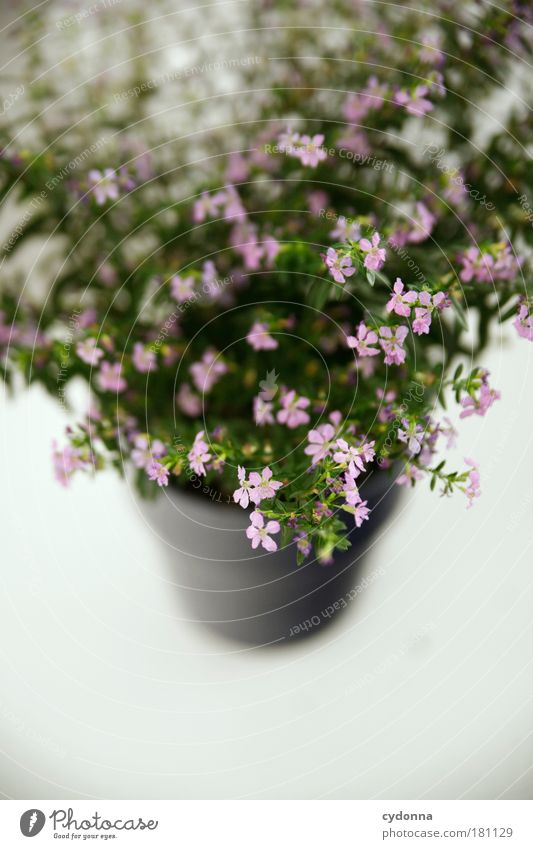 Nature Beautiful Plant Flower Calm Life Pink Esthetic Growth Decoration Flowerpot Embellish Section of image Partially visible Delicate Houseplant