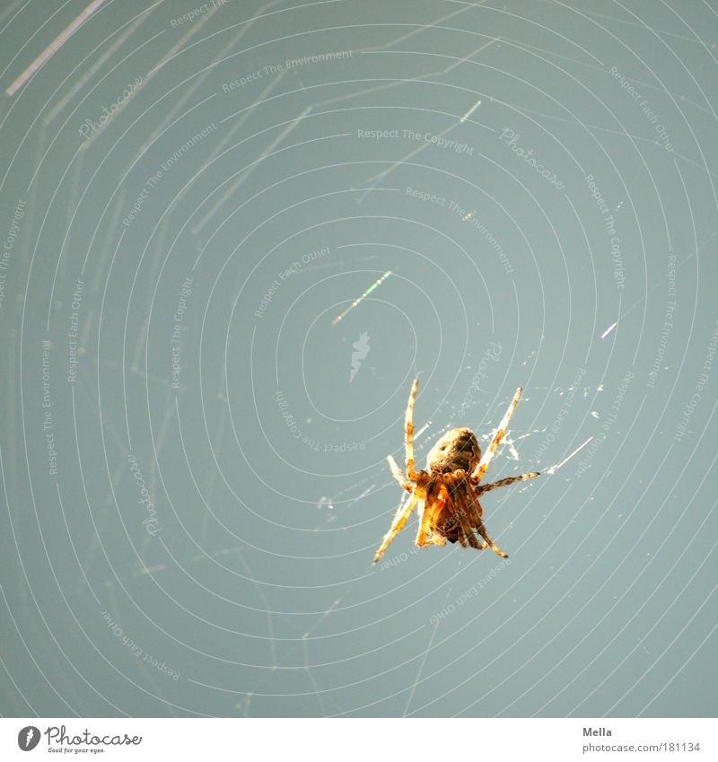Spider in the morning ... Colour photo Subdued colour Exterior shot Deserted Copy Space left Copy Space top Day Long shot Full-length Environment Nature Animal