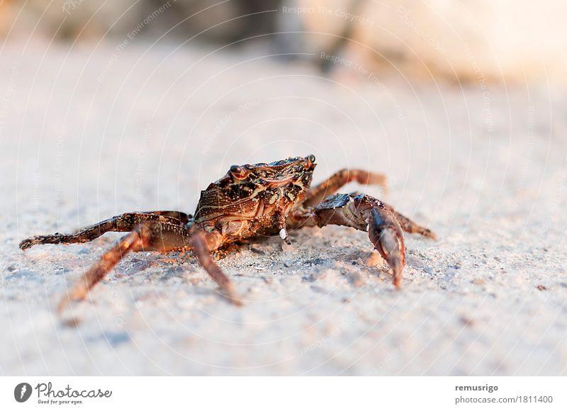 Crab Summer Sun Ocean Animal Street Sand Sit Shell Pacific Ocean