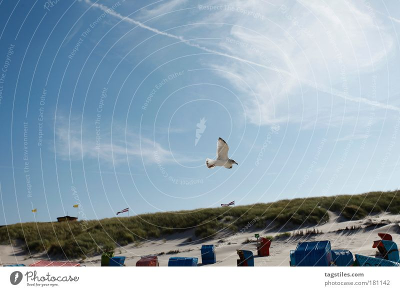 Ocean Beach Vacation & Travel Animal Relaxation Freedom Sand Bird Germany Wind Break Peace Feather Beach dune Dune Seagull