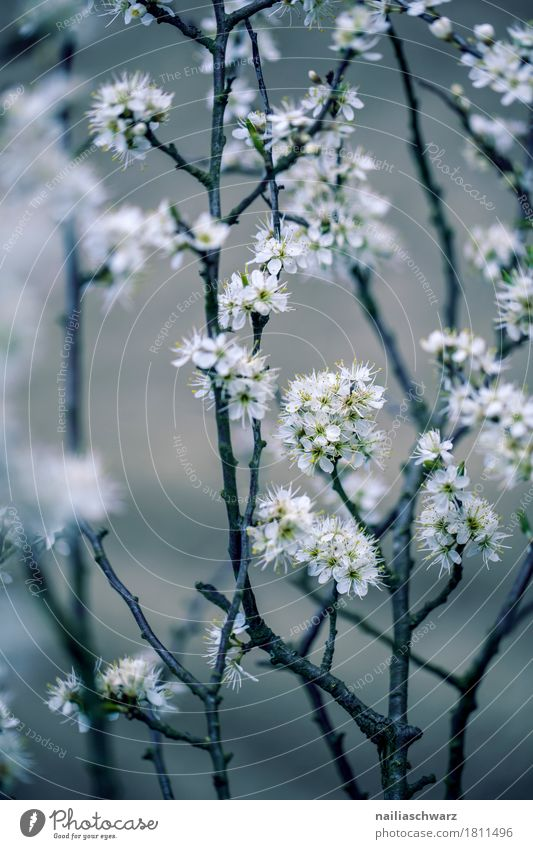 spring Environment Nature Plant Spring Tree Flower Blossom Foliage plant Agricultural crop Wild plant Branch Garden Park Meadow Blossoming Jump Faded Growth