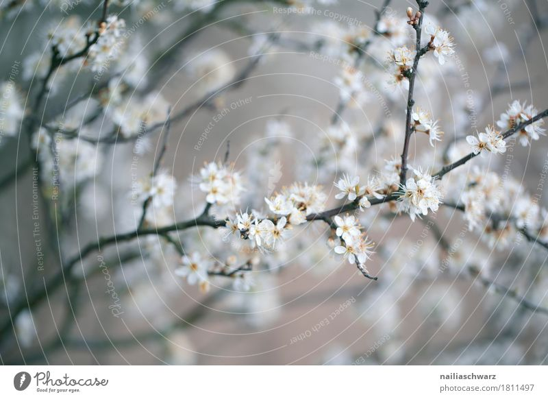 Nature Plant White Tree Blossom Spring Meadow Natural Garden Gray Jump Park Growth Power Idyll Blossoming