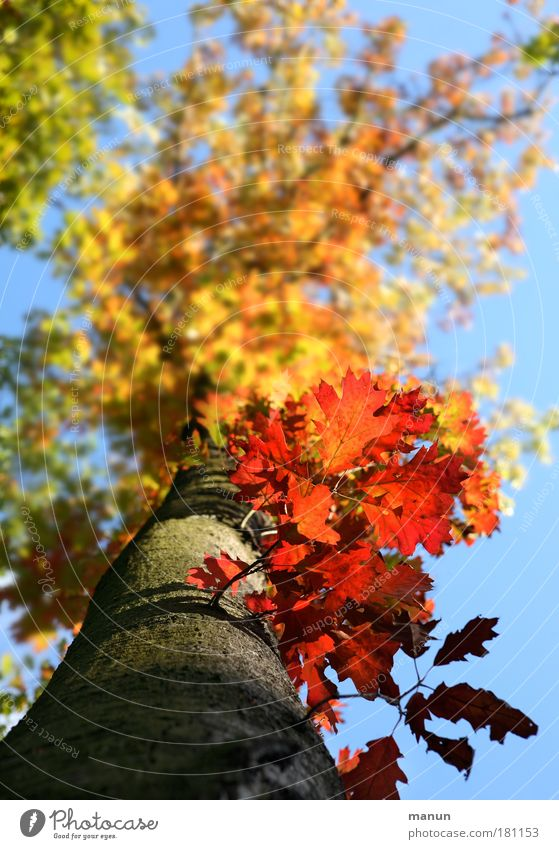 Sky Nature Tree Red Leaf Yellow Autumn Park Fresh Happiness Illuminate Change Beautiful weather Transience Autumn leaves Autumnal