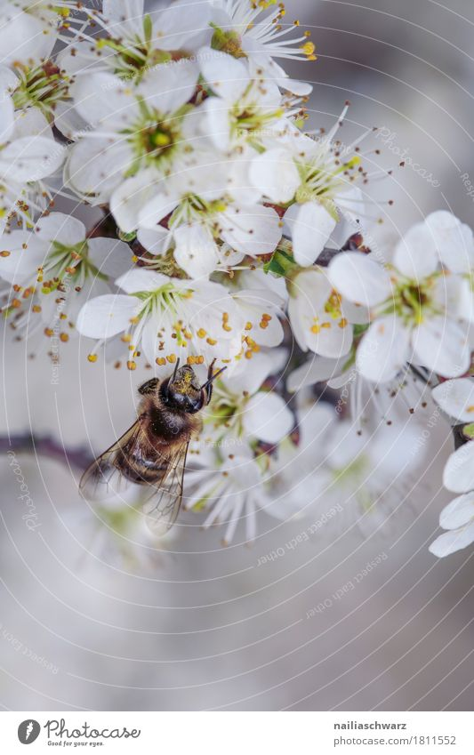 spring Environment Nature Plant Animal Spring Flower Blossom Garden Park Meadow Field Farm animal Bee Insect 1 Work and employment Blossoming Fragrance Jump