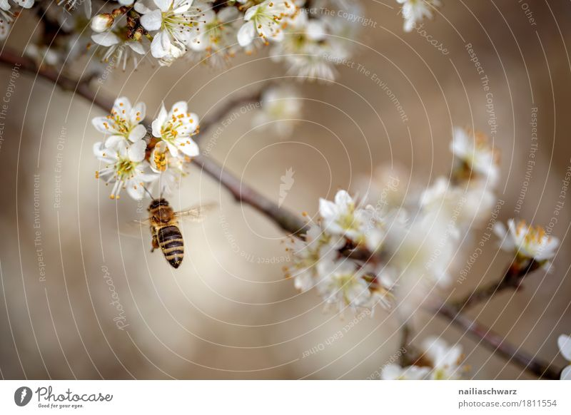 spring Environment Nature Plant Animal Spring Climate Climate change Tree Flower Blossom Branch Twigs and branches Pet Bee Insect 1 Work and employment