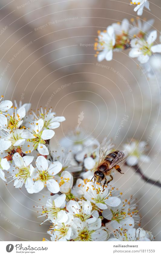 BSpring Environment Nature Plant Animal Tree Flower Blossom Agricultural crop Bee Insect Work and employment Fragrance Flying Jump Growth Happiness Near Natural