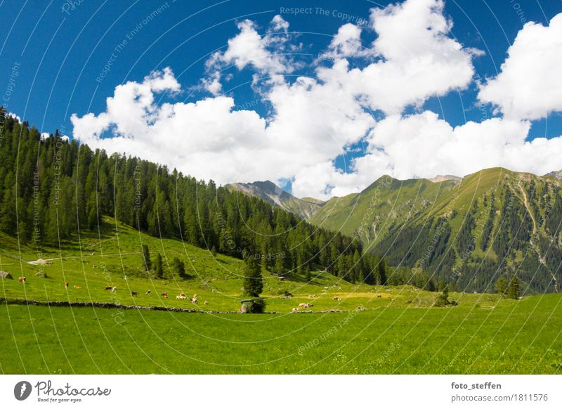 alpine meadow Vacation & Travel Trip Freedom Summer Summer vacation Mountain Hiking Landscape Sky Clouds Meadow Alps Farm animal Cow Herd Dream Gigantic