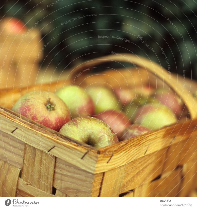 apples Colour photo Exterior shot Copy Space top Neutral Background Day Shallow depth of field Food Fruit Apple Nutrition Feeding To enjoy Healthy Delicious Wet