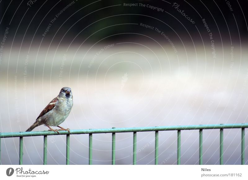 Nature Animal Relaxation Environment Small Garden Dream Moody Park Bird Contentment Wait Sit Flying Natural Design