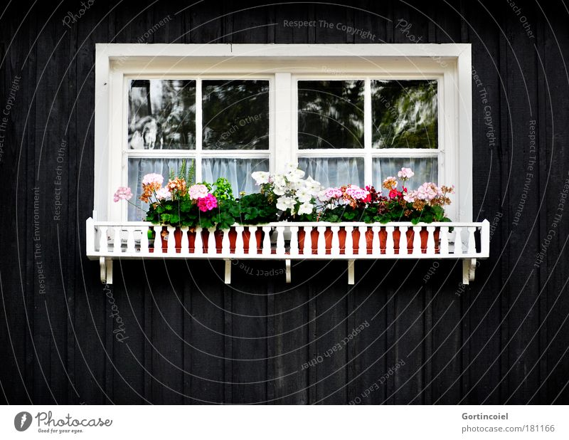White Green Flower Black House (Residential Structure) Window Wall (building) Wall (barrier) Germany Pink Flat (apartment) Facade Lifestyle Living or residing Decoration Kitsch