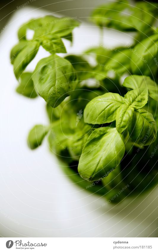 Green Beautiful Plant Life Nutrition Healthy Growth Uniqueness Kitchen Cooking & Baking Herbs and spices Idea Joie de vivre (Vitality) To enjoy Delicious