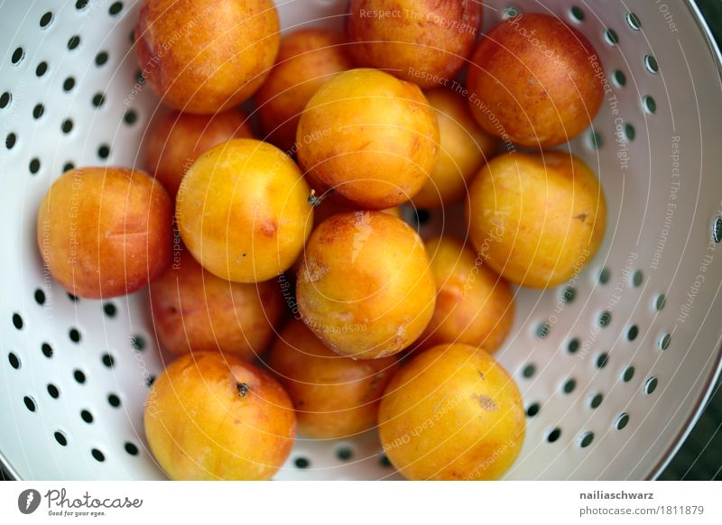 Still life with mirabelle plums Food Fruit Yellow plum Pomacious fruits Organic produce Vegetarian diet Diet Crockery Bowl Metal Fragrance Fresh Healthy