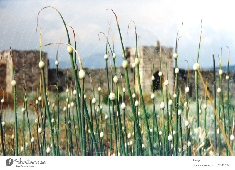 ruin Ruin Southern Europe Plant Castle