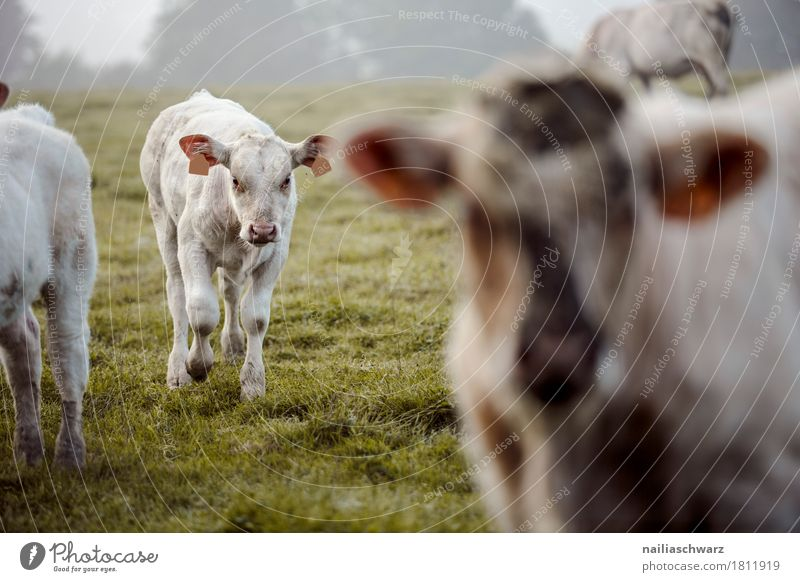Nature Summer Landscape Animal Baby animal Environment Meadow Natural Grass Happy Field Communicate Idyll Europe Walking Joie de vivre (Vitality)