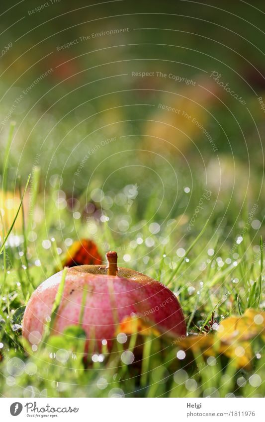 Nature Plant Green Red Leaf Calm Environment Yellow Autumn Grass Healthy Garden Food Brown Moody Glittering