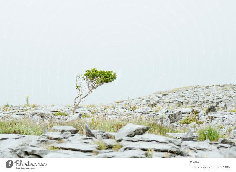 Nature Plant Tree Landscape Environment Natural Stone Gray Earth Growth Bushes Hill Tilt Ireland Plain Stony