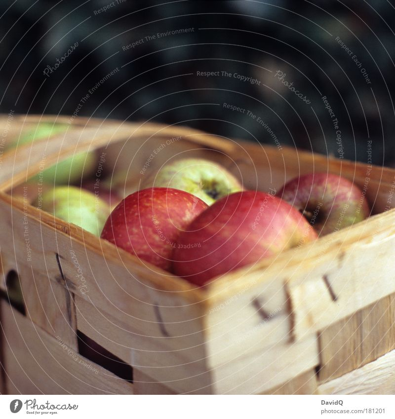 Nutrition Food Healthy Fruit Wet Apple To enjoy Delicious Basket Feeding Sour