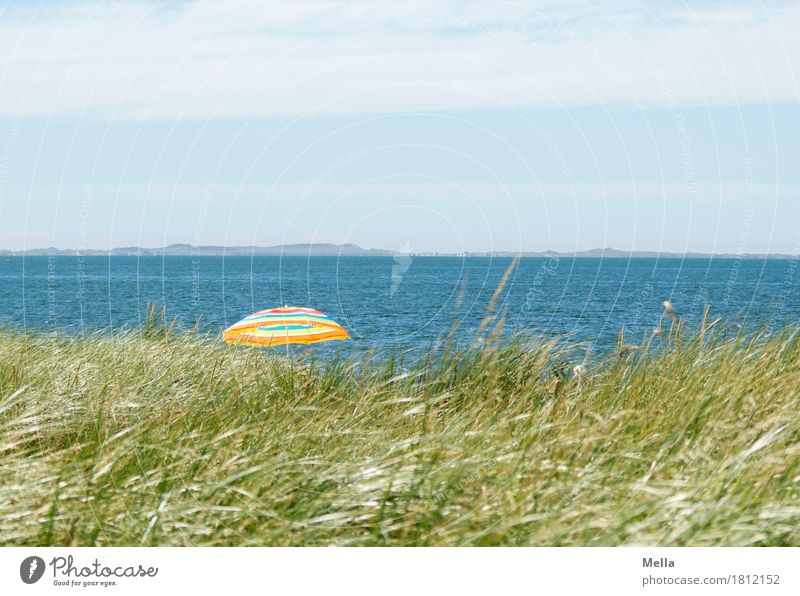 Summer, sun, sea and ... Beach? Vacation & Travel Tourism Trip Summer vacation Ocean Environment Nature Landscape Climate Beautiful weather Warmth Grass Coast