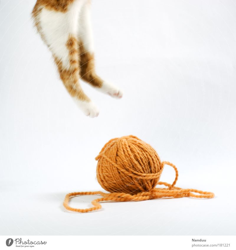 Cat Animal Playing Baby animal Jump Funny Wool Crazy Cute Uniqueness Whimsical Hang Pet Strange Gymnastics Rebellious