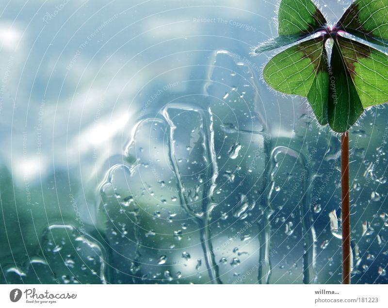 Four-leaf clover - Lucky clover Drops of water Bad weather Rain Plant Clover Cloverleaf Window Emotions Joie de vivre (Vitality) Loneliness Uniqueness Happy