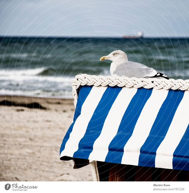 incubate Nature Landscape Sand Water Summer Autumn Weather Waves Coast Beach North Sea Baltic Sea Animal Bird Seagull 1 Observe Relaxation Freeze Crouch Looking